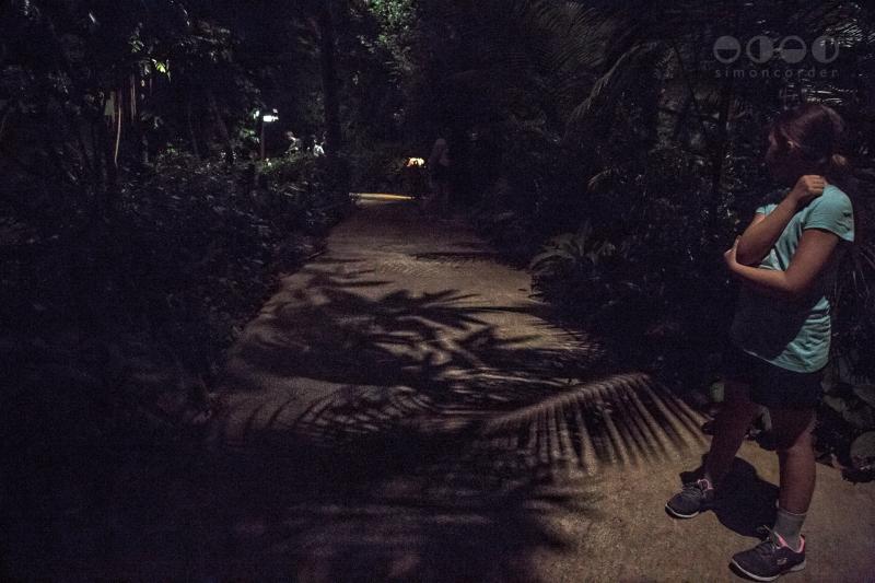 Night Safari, Singapore